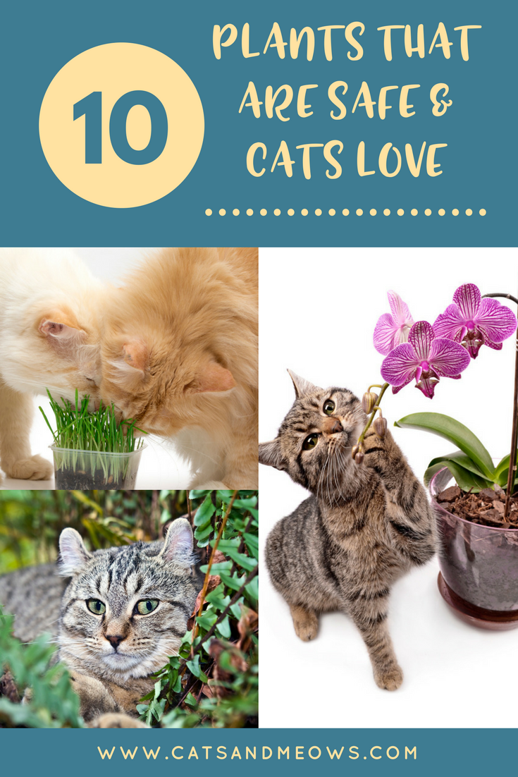10 Plants That Are Safe and That Cats Love