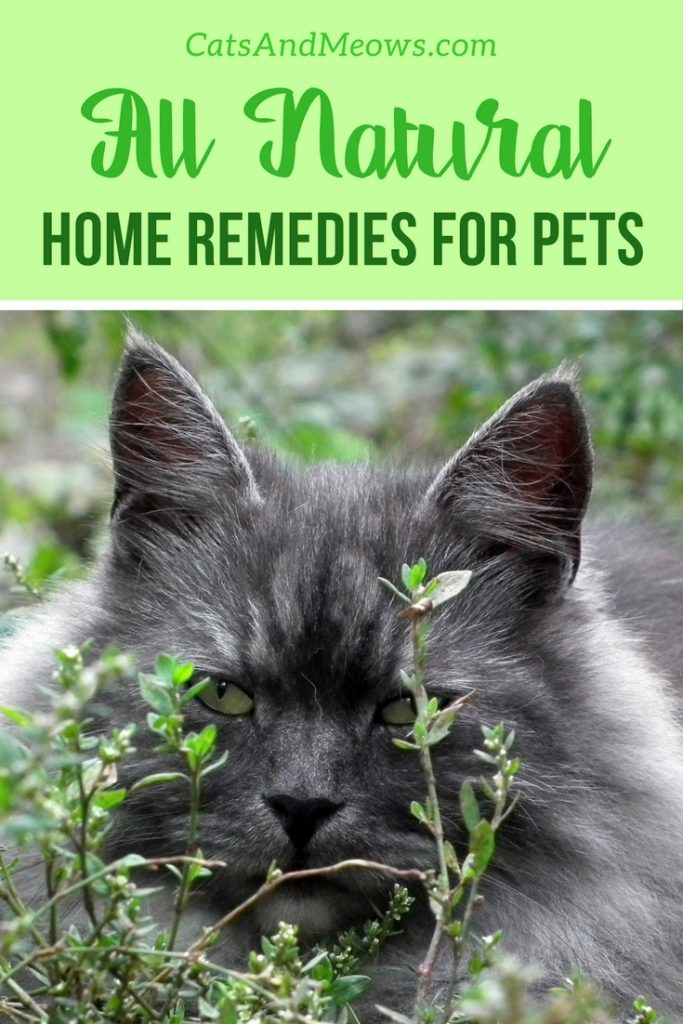 All-Natural Home Remedies for Pets