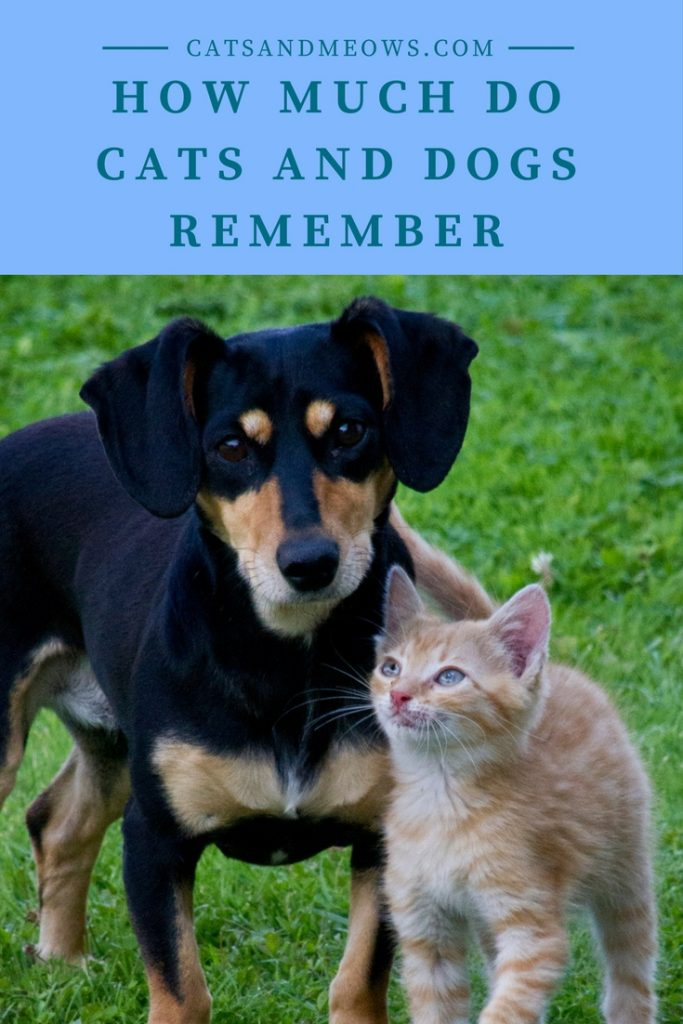 How Much Do Cats and Dogs Remember
