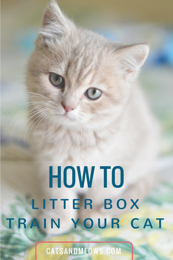 How to Litter Box Train Your Cat - We Have The Answers!