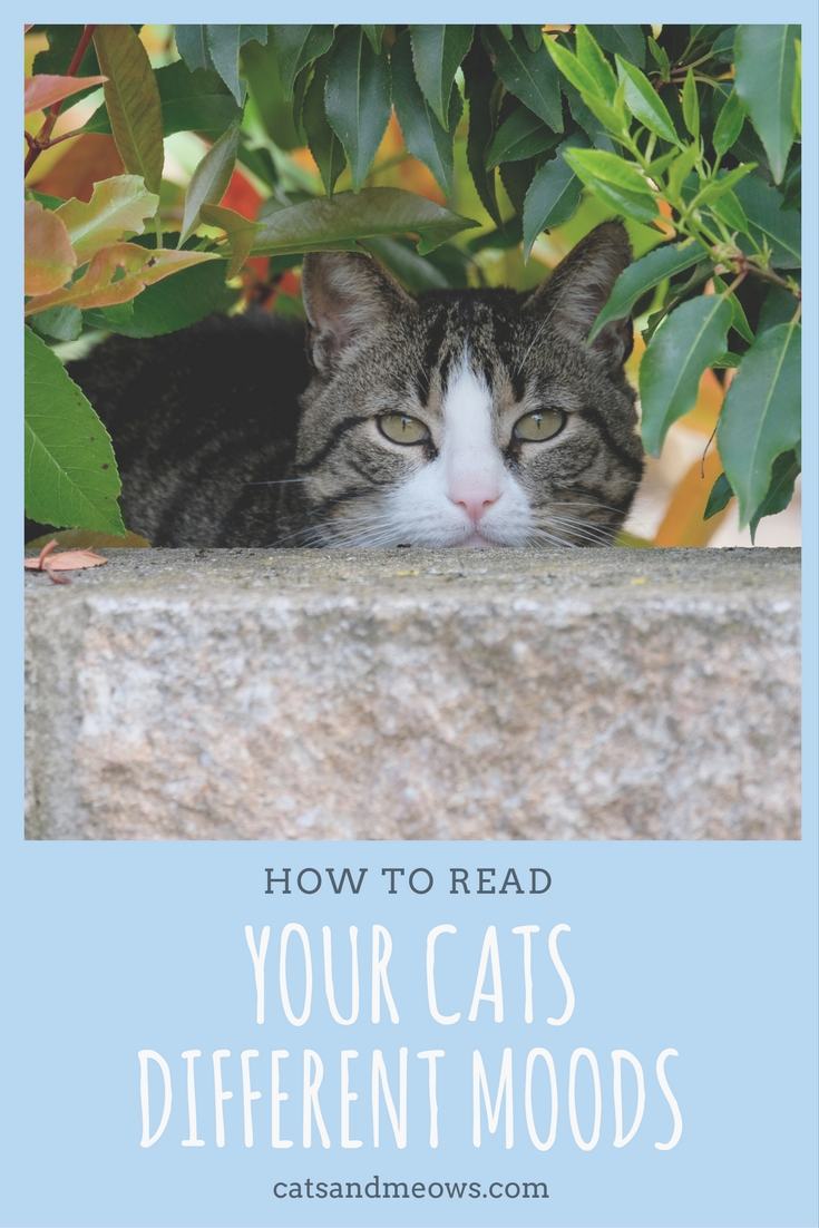 How to Read Your Cats Different Moods