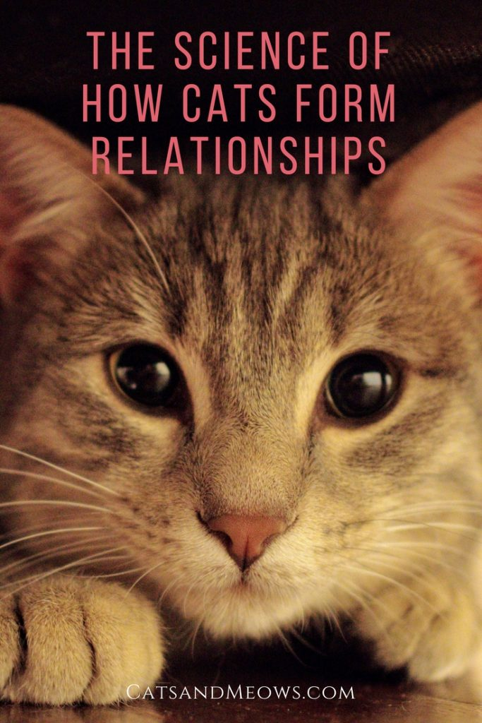 The science of how cats form relationships