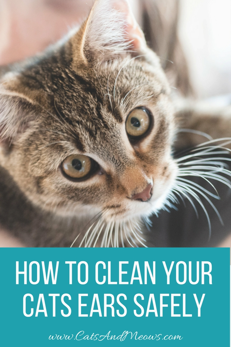 How to Clean Your Cats Ears Safely