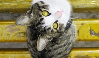 10 Popular Cat Names