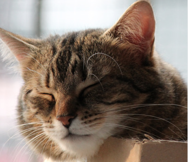 how to make a cat birthing box