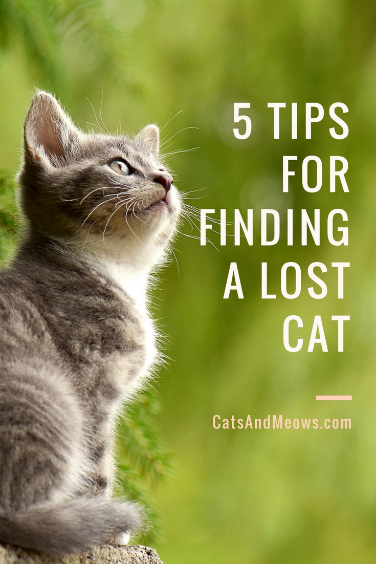 5 Tips For Finding A Lost Cat