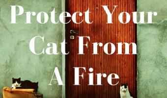 5 Ways To Protect Your Cat From Fire