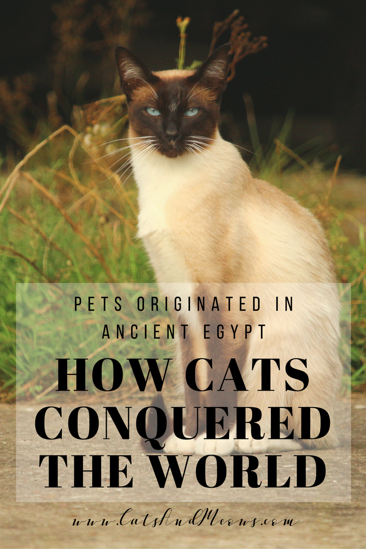 How Cats Conquered the World: Pets Originated in Ancient Egypt