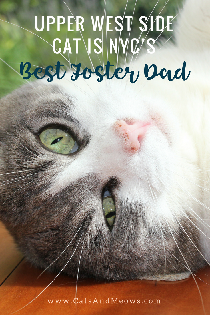 Upper West Side Cat is NYC's BEST Foster Dad
