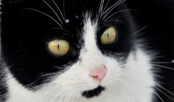 Our Tips For Preventing Heat Stroke In Cats