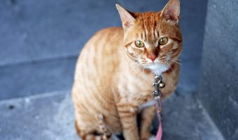 5 Things To Be Aware Of As Your Cat Ages