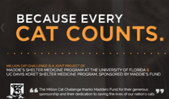 June Is National Adopt-A-Cat Month: 'Because Every Cat Counts'