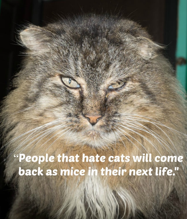 Cat Quotes: Some Of The Most Popular!