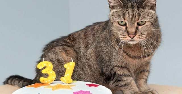 World's Oldest Cat, 'Nutmeg' Turns 31 Years Old!