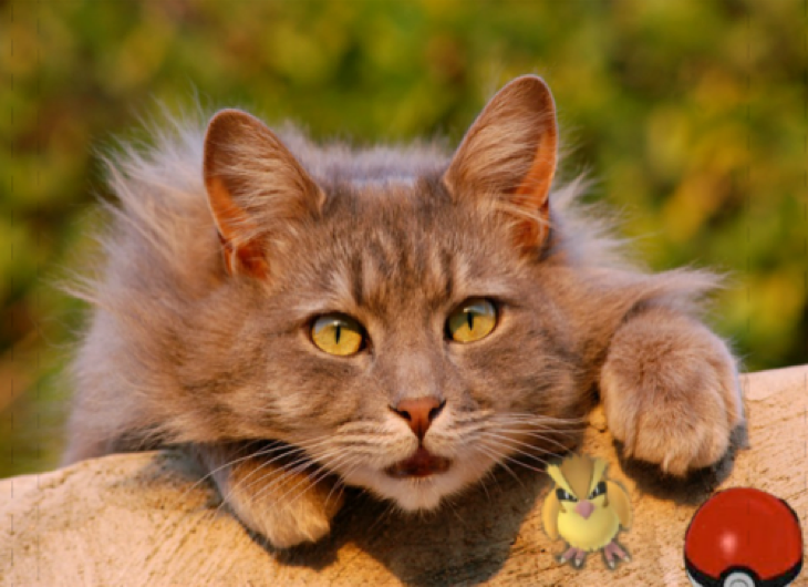 Cats Can't Catch Pokemon GO Creatures Or Sense Them, But They Certainly Make Cute Pictures