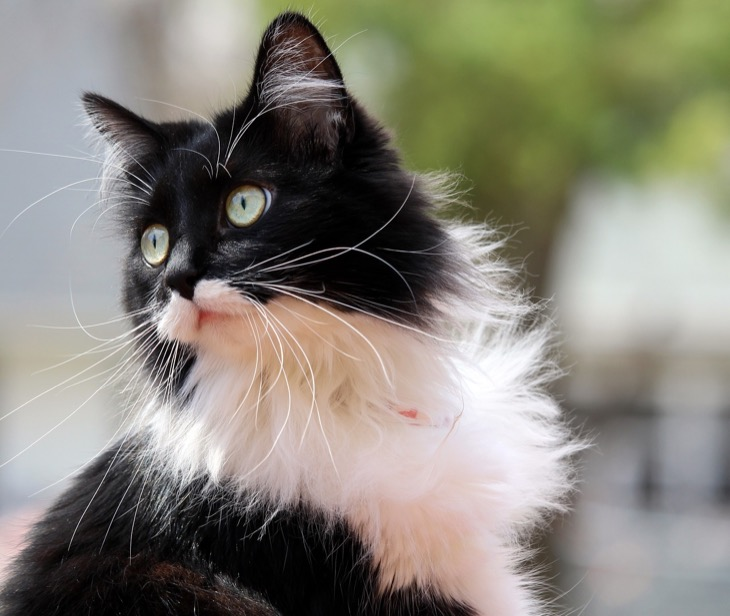 What Is A Cat's Life Expectancy? Pets Living Longer And Healthier Lifestyles Than Ever Before