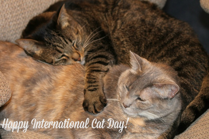 International Cat Day August 8: Celebrate Felines – Read The Cat in the Hat – Sing Soft Kitty, Warm Kitty