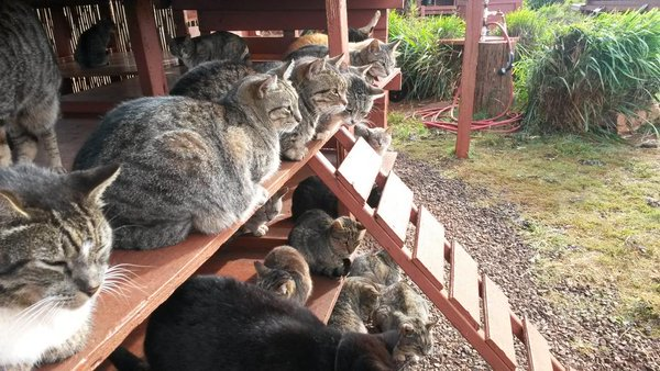 Lanai Cat Sanctuary – Spend The Day In A Hawaiian Paradise Cuddling With Hundreds Of Cats!