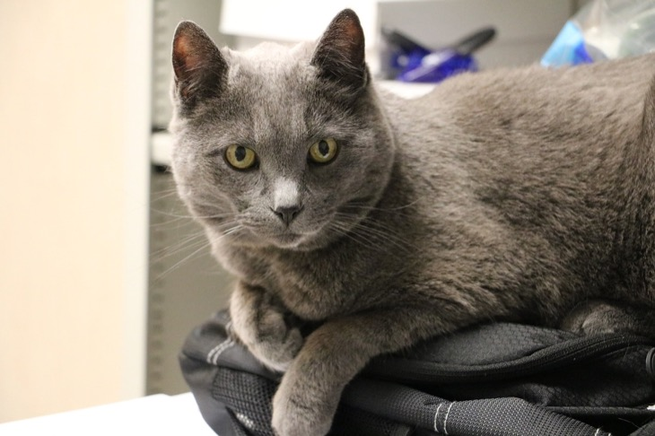 Cat Health Insurance: What Questions Should You Ask?