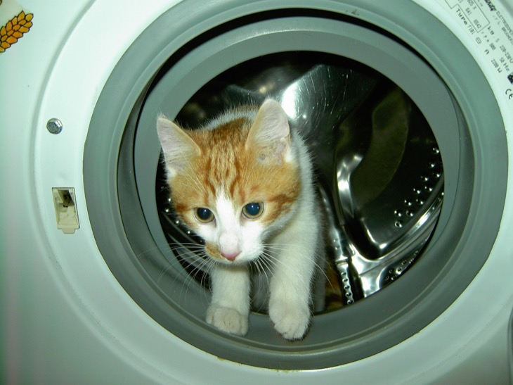 Cat Naps In Washing Machine - Survives Spin Cycle – Nominated for Pet Survivor Award