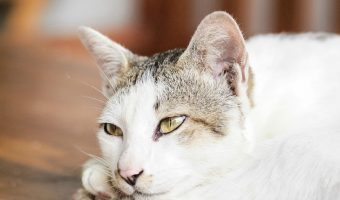 Thanksgiving Cat safety Check List – Keep Your Pets Safe During The Holidays!