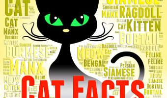 Crazy and Fun Cat Facts