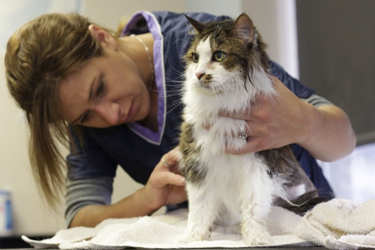 Guide to Cat Grooming
