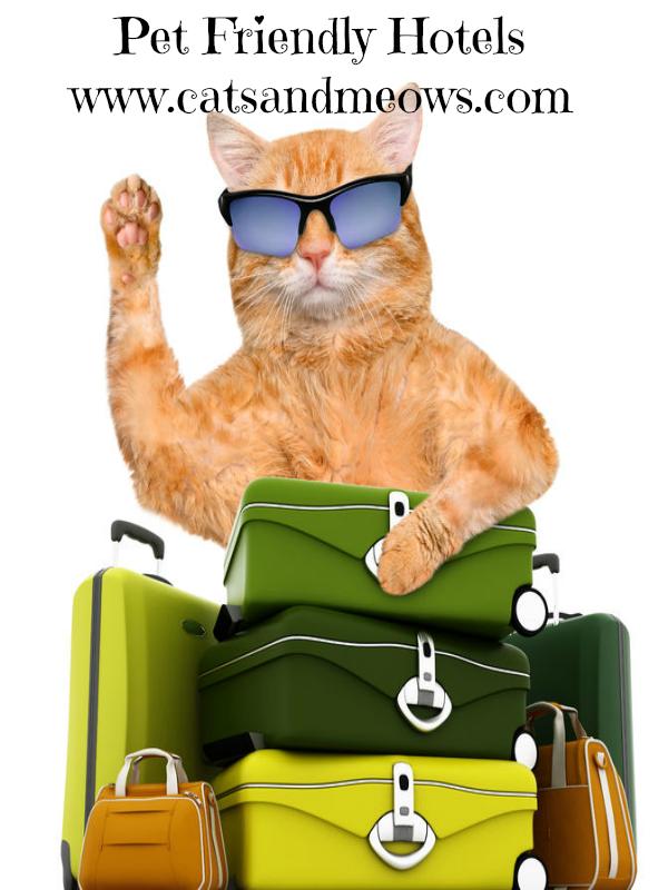 Calistoga Pet Friendly Hotels