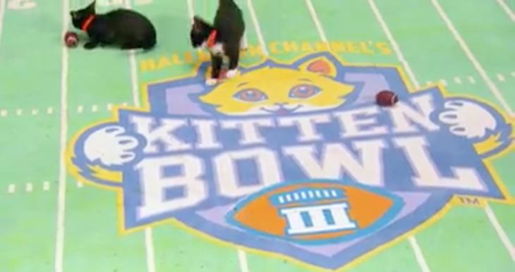 The Hallmark Kitten Bowl Returns February 5, 2017