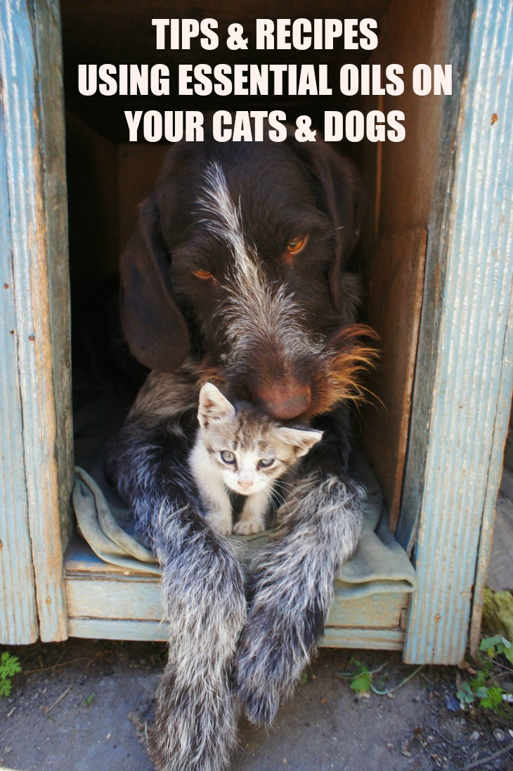 Tips & Recipes For Using Essential Oils On Your Cats & Dogs