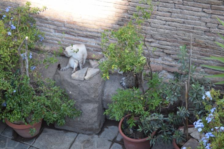 Torre Argentina Cat Sanctuary Rome10