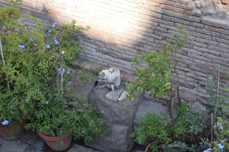 Torre Argentina Cat Sanctuary Rome15