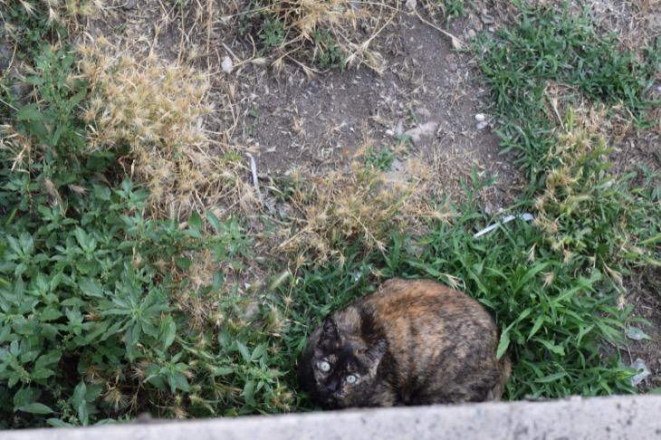 Torre Argentina Cat Sanctuary Rome17