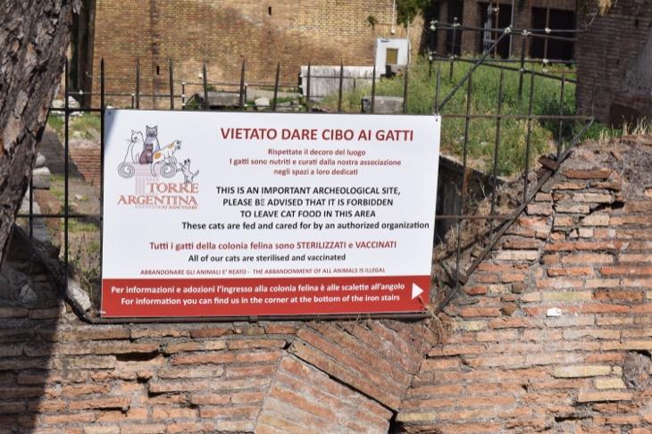 Torre Argentina Cat Sanctuary Rome18