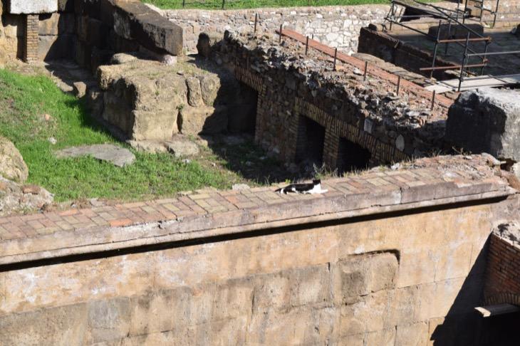 Torre Argentina Cat Sanctuary Rome2