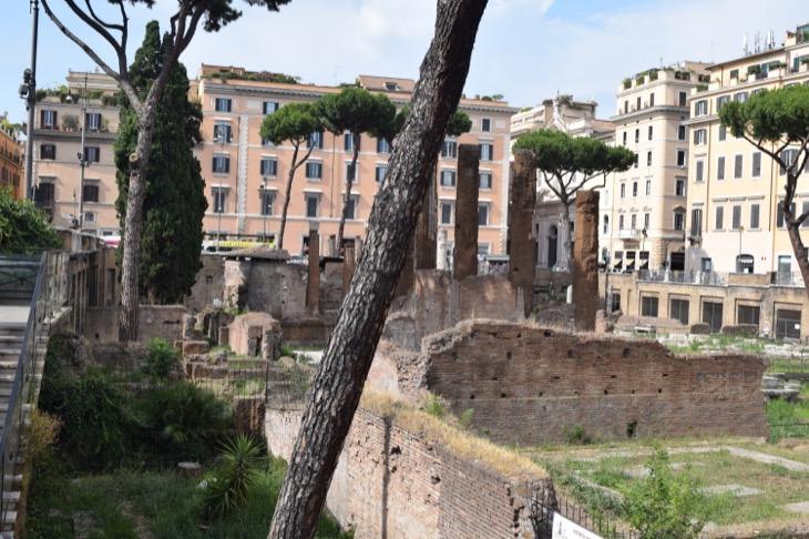 Torre Argentina Cat Sanctuary Rome20