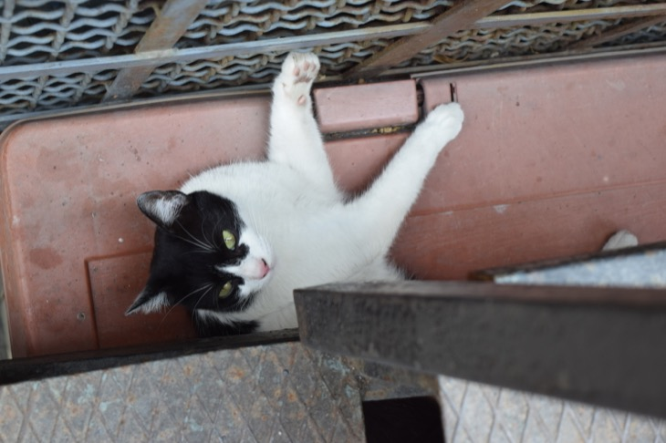 Torre Argentina Cat Sanctuary Rome21
