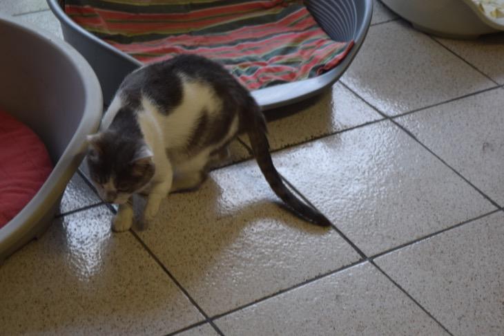 Torre Argentina Cat Sanctuary Rome25