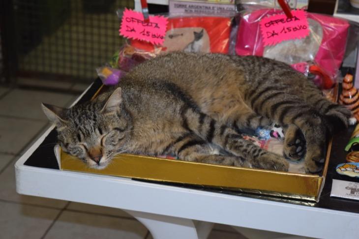 Torre Argentina Cat Sanctuary Rome28