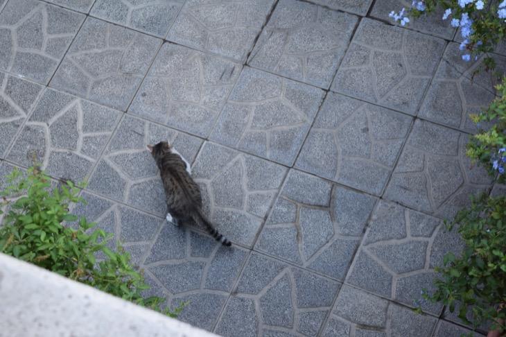Torre Argentina Cat Sanctuary Rome3