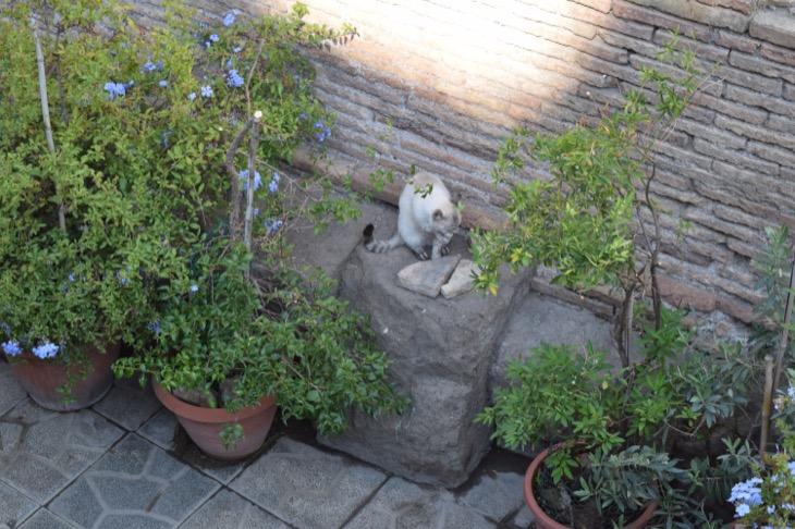 Torre Argentina Cat Sanctuary Rome4