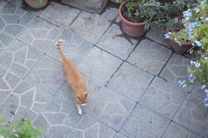 Torre Argentina Cat Sanctuary Rome5