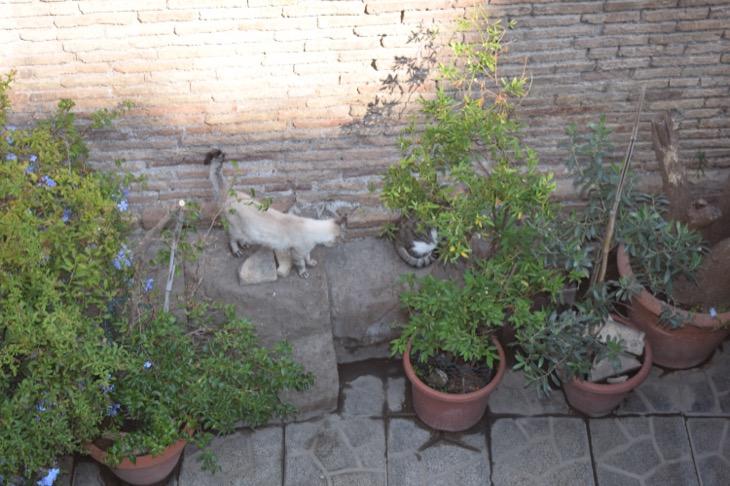 Torre Argentina Cat Sanctuary Rome6