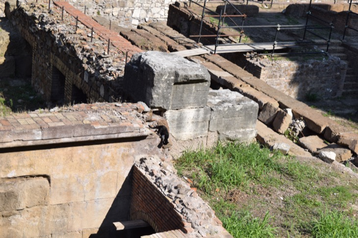Torre Argentina Cat Sanctuary Rome7