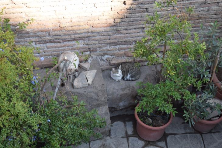 Torre Argentina Cat Sanctuary Rome8
