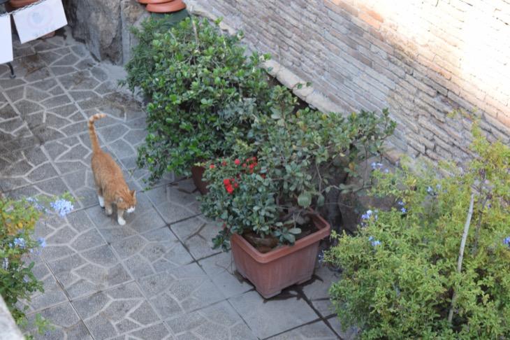 Torre Argentina Cat Sanctuary Rome9