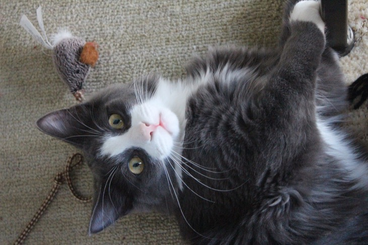 Guide to Choosing Cat Toys