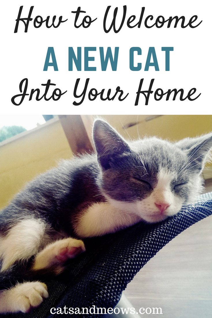 You've Chosen A Cat - How to Welcome A Cat Into Your Home