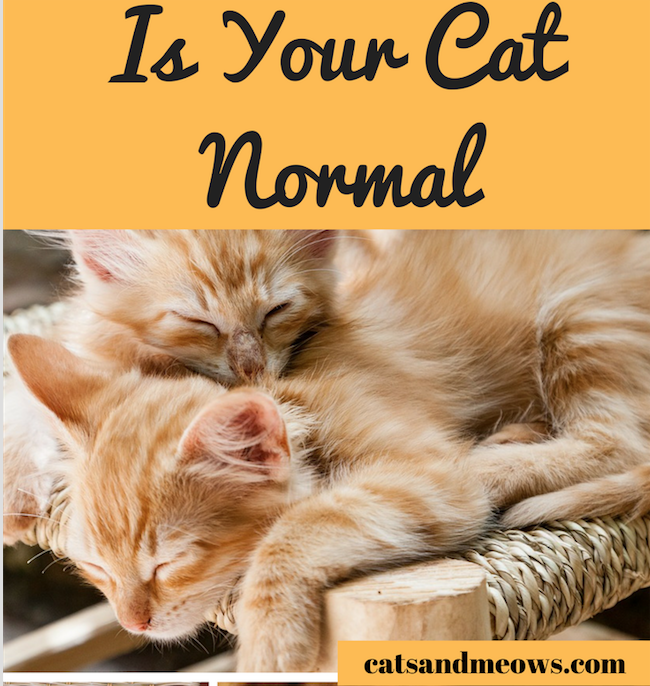 How To Know if Your Cat Is Normal