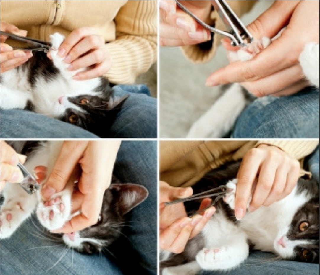 Tips For Cutting Your Cat s Nails Cats and Meows